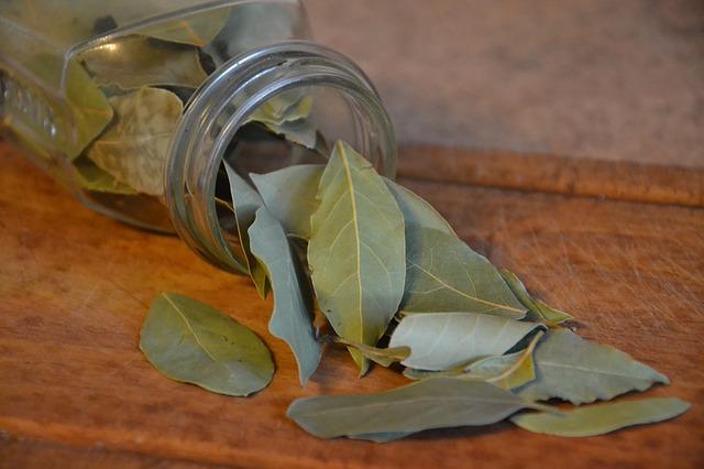 foglie alloro